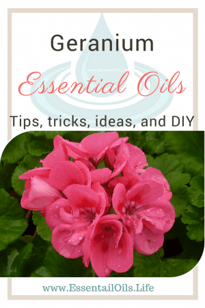 How do you use geranium essential oil? We have some ticks, tricks, and ideas that you may love