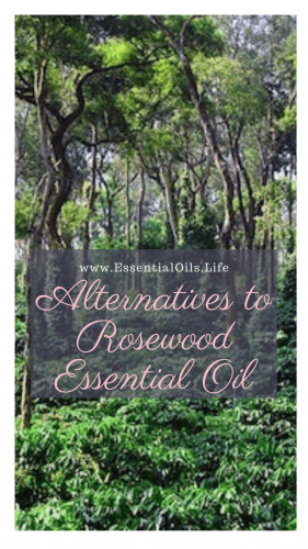 Feel like you're missing out on Rosewood essential oil because of Rosewood being endangered? Skip the expensive, hard to find, and illegal Rosewood essential oil and opt for one fo these fantastic replacements! Just because you shouldn't be using rosewood doesn't mean you can't enjoy similar benefits.