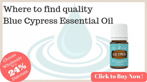 Where to purchase quality blue cypress essential oil