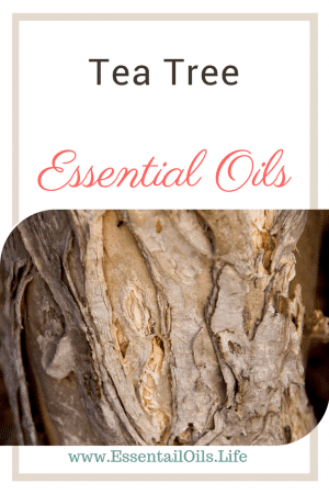 Learn more about tea tree can help with the quality of your skin, enhancing your wellness routine, supporting your digestion and breathing, and is a great additive to your DIY cleaning products. Learn more about tea tree essential oil and what you can do with it in this article